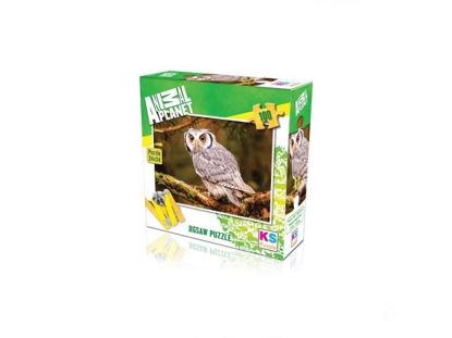 Bengal Eagle Owl   100P resmi